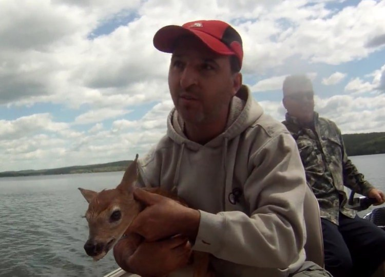 Watch: Fisherman rescue baby deer from drowning