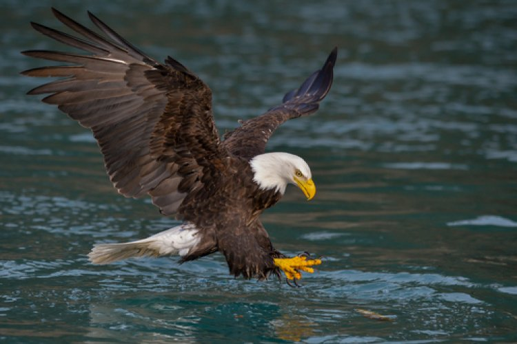 Watch: What is the Eagle Looking for in the River?
