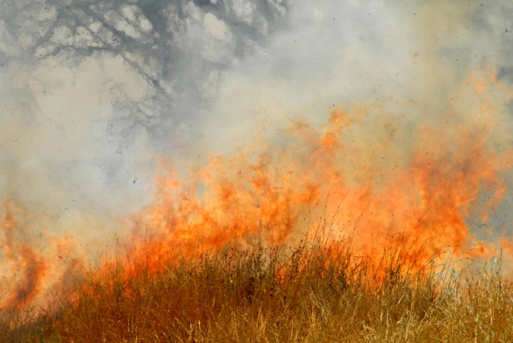 Arsonists Caught Red-Handed in Northern Jerusalem