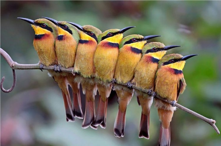 Gallery: Birds Cuddle Together to Keep Themselves Warm