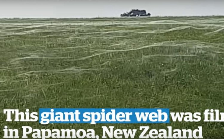 A Giant Spider Web