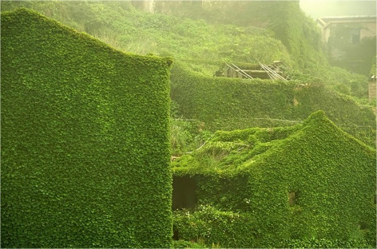 Creeping Plants Invade an Abandoned Fishing Village in China