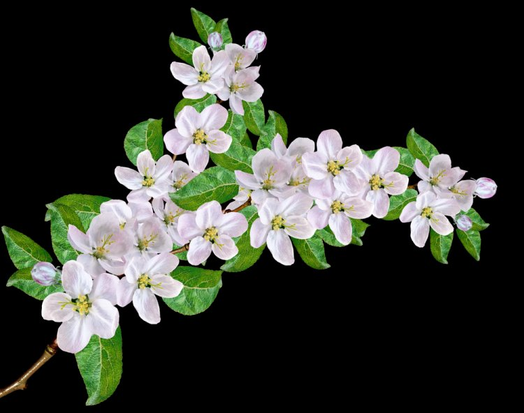 Bamidbar/ Shavuot: Of Flowers and Weeks