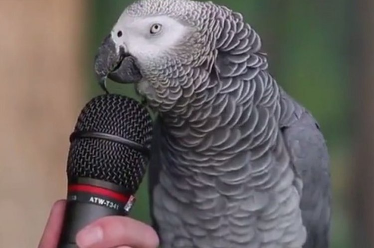 Watch: Parrot Shows Off his Skills