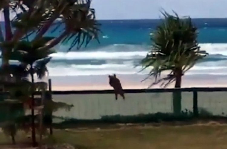 Watch: 'Ever Seen a Flying Dog?'