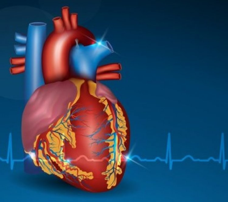 10 Astounding Facts about the Heart