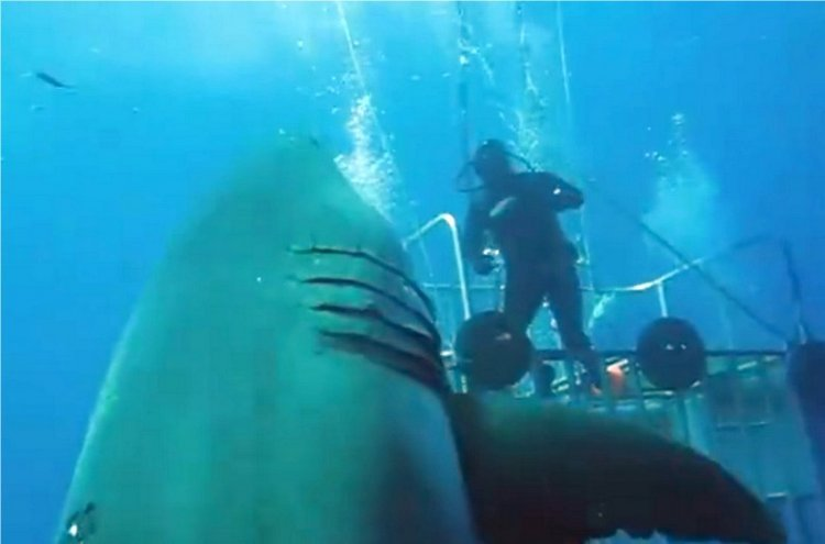 Watch: Biggest Great White Shark Ever Seen