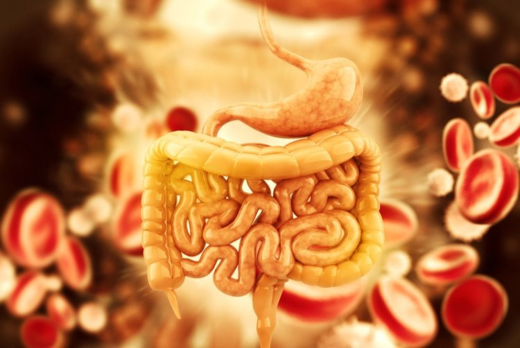 7 Tips to Help Your Digestive Tract