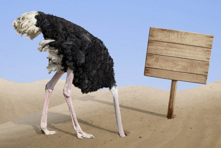 Did You Know that Ostriches Don't Put Their Heads in the Sand?
