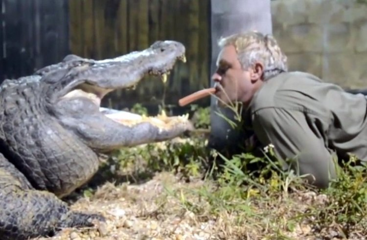 Watch: Zoo Keeper Feeds Crocodiles with his Mouth