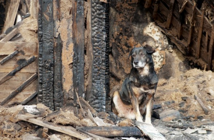 Dog Saves Family from Anti-Semitic Arson Attack in Paris