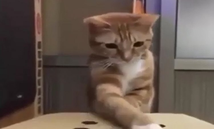 Watch: Funny Animal Clips that will Make you Smile