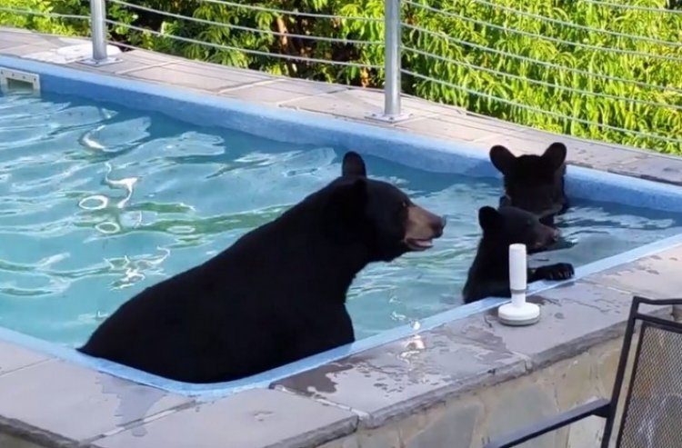 Watch: Who said Bears don't Spend Quality Family Time?