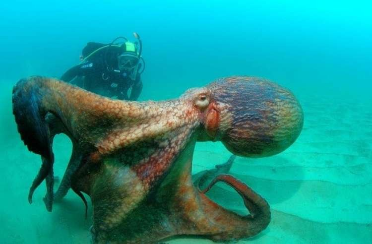 Gallery: Creatures you Wouldn't Want to Meet in the Depths of the Ocean