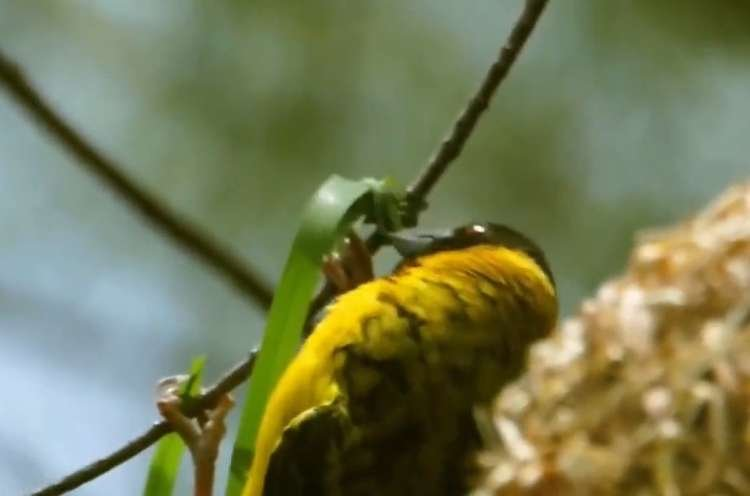 How Does a Bird Build its Nest? Must See
