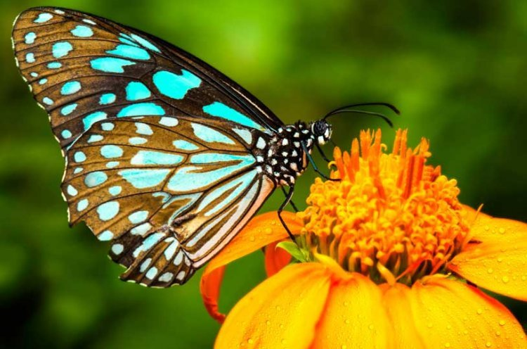Marital Harmony – A Lesson from the Fly and the Butterfly