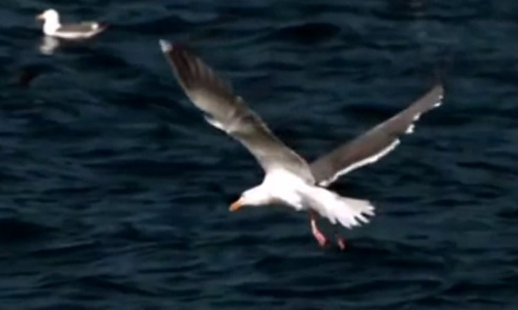 How do Birds Fly? Watch a Remarkable Scientific Explanation