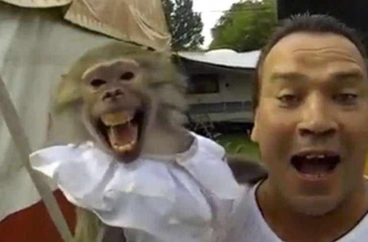Watch: This Monkey Will Put a Smile on Your Face