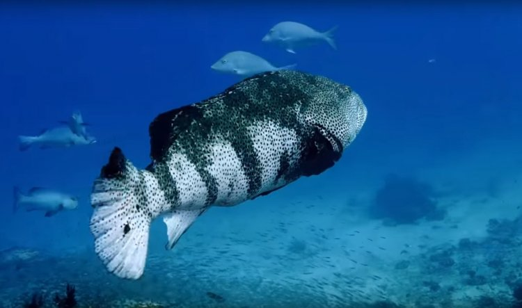 Stunning Footage of the Great Barrier Reef - Must See