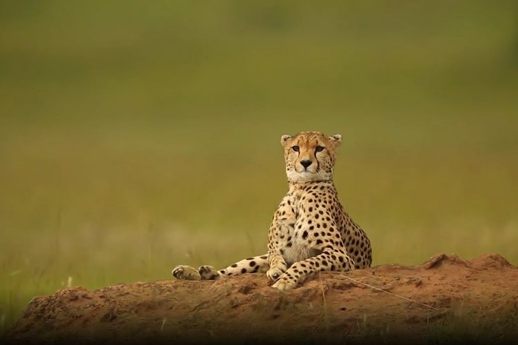 Wonders of Creation: Stunning Wildlife Footage in Kenya
