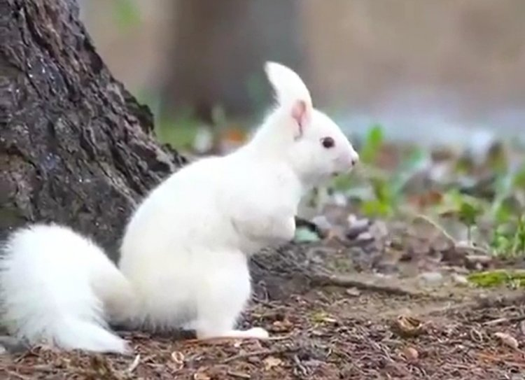 Wonders of Creation: Watch a Collection of Fascinating Nature Videos