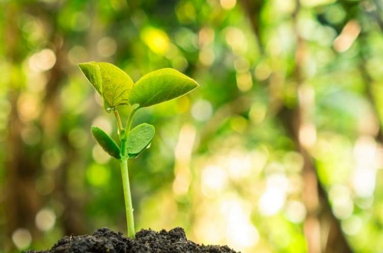 Sowing The Seeds - Adapting the Educational Approach to the Maturity of the Child