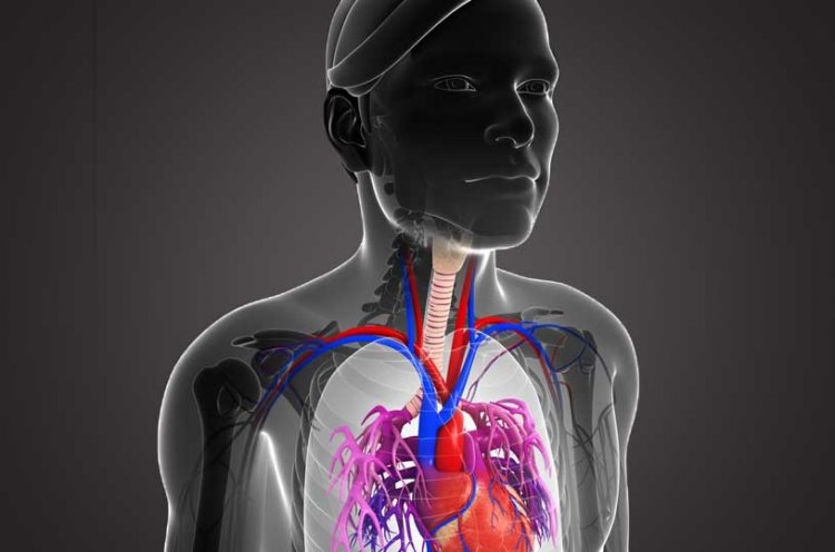 The Human Body - A Serious Operation